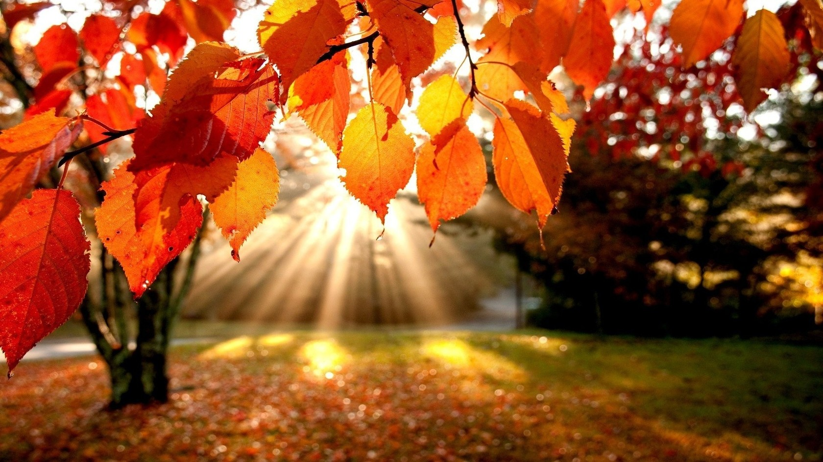 Ten top tips to get your home ready for Autumn | Llanmoor Homes